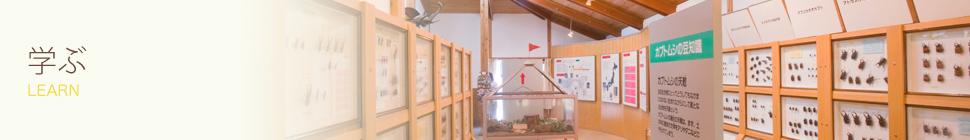 展示中または過去に展示飼育した外国のカブトムシ・クワガタムシ