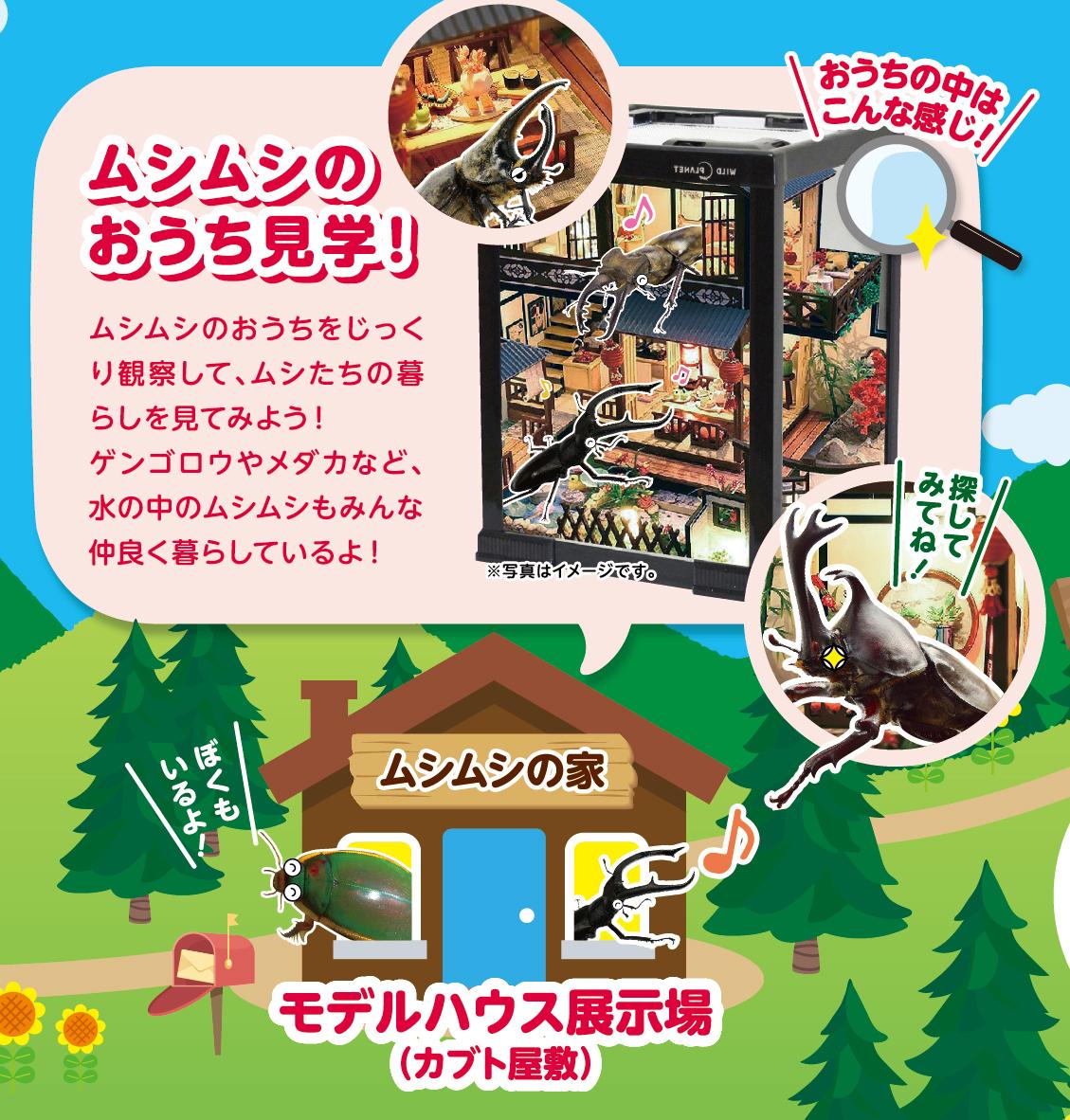 あつまれムシムシの森イメージ4